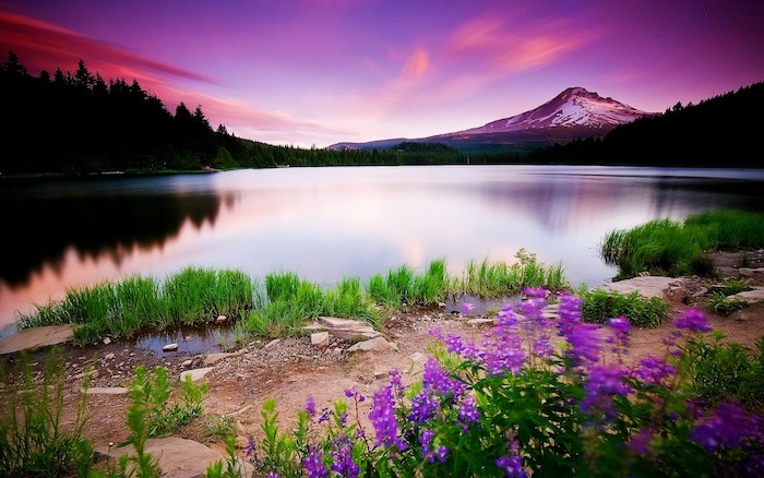 spring flowers background, mountain landscape, lots of trees, surrounding a large lake