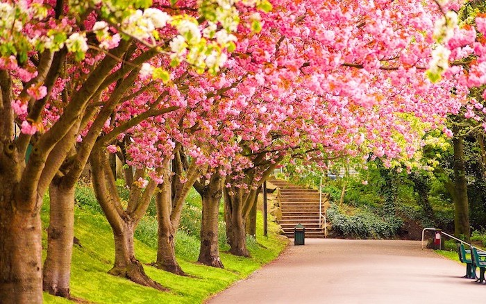 blooming trees, looming over a pathway, leading to a staircase, spring backgrounds, desktop wallpaper
