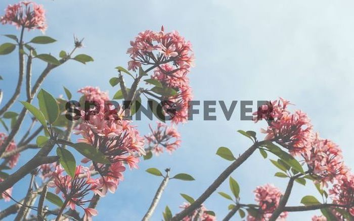 spring fever quote, spring pictures for desktop, blue skies, blooming tree, in the background