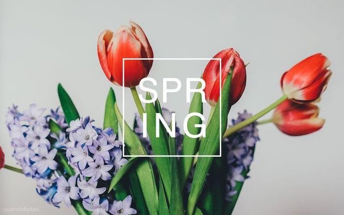 spring quote, red tulips, blue hyacinth flower, in the background, spring cover photo, white background