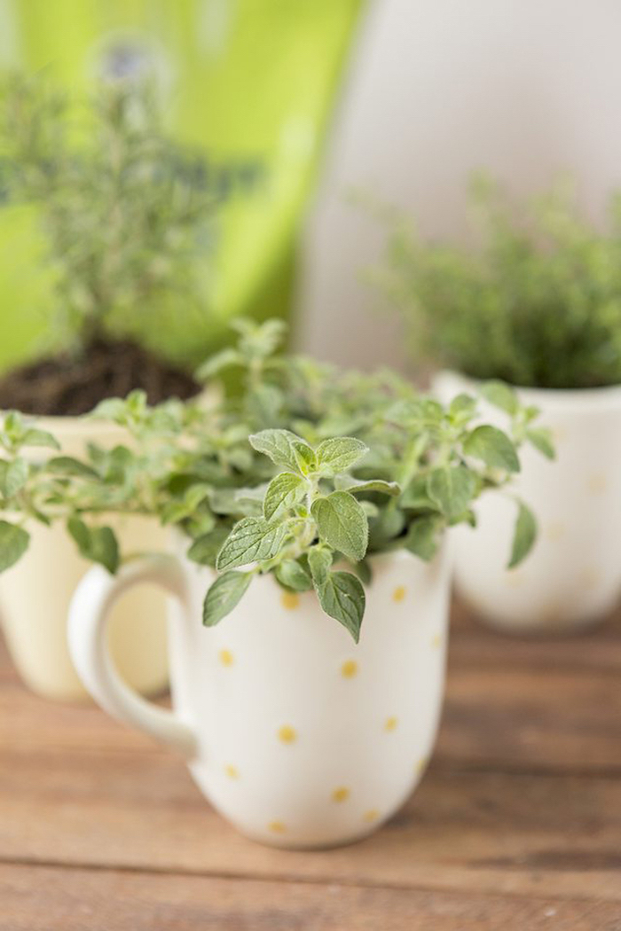 wooden table, housewarming gift ideas, herb garden, step by step, diy tutorial, coffee mugs