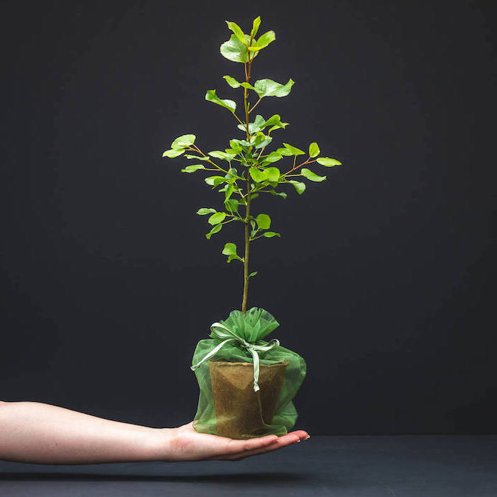 black background, potted plant, hand holding it, unique housewarming gifts