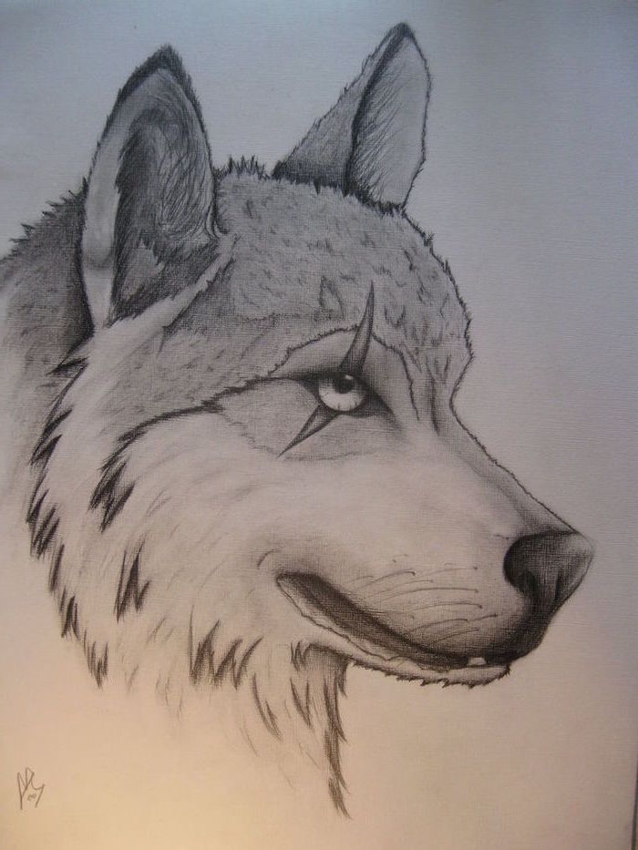 how to draw step by step for beginners, wolf head, eye scar, black and white, pencil sketch