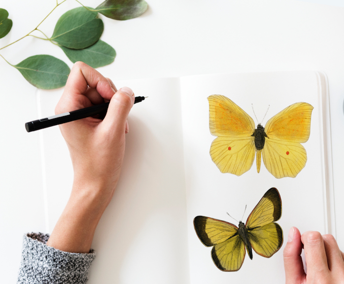 butterflies drawing, on a white notebook, beach tumblr, black pencil