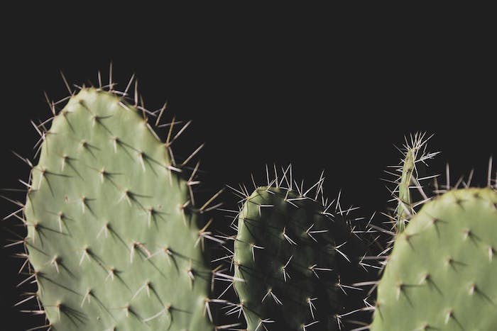 green cactuses, black background, cute tumblr wallpapers