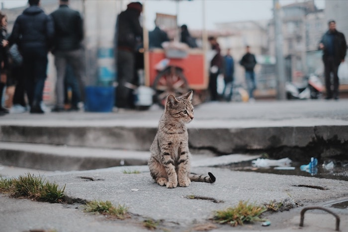 cute tumblr wallpapers, cat standing, on a cement block, in black and grey, people in the background