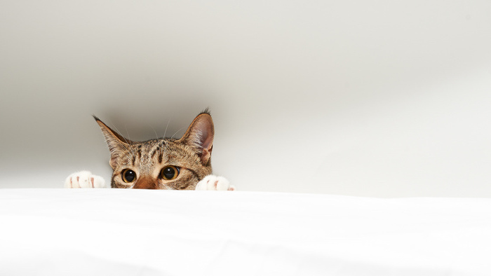 cute backgrounds for girls, cat showing its head, on a white background
