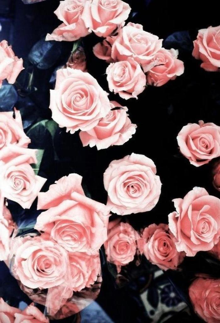 pretty iphone wallpaper, pink roses bush