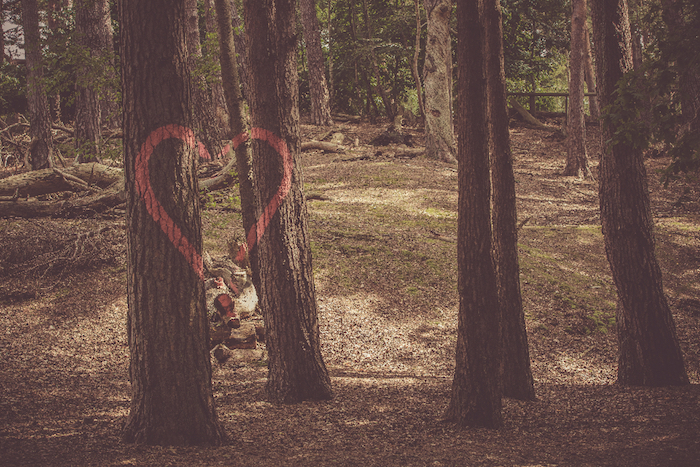 tall trees, forest landscape, red heart drawing, tumblr screensavers