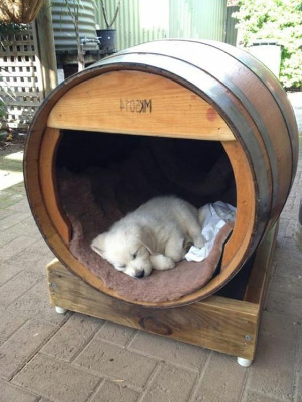 la niche pour chiens modeles