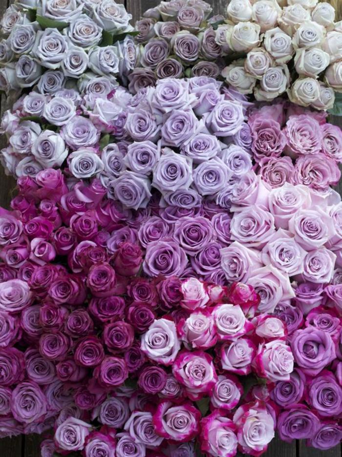 La Signification Des Roses Quelle Couleur De Roses Offrir