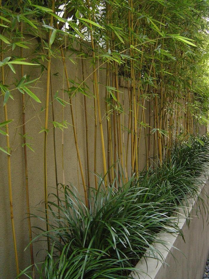 Comment Planter Des Bambous Dans Son Jardin