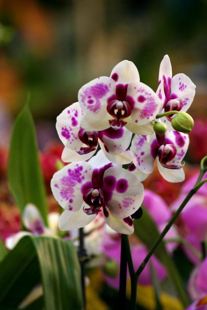 Les Fleurs Dintrieur Les Orchides En 40 Images