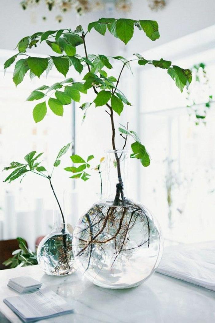 Savourez La Beaut De La Plante Dintrieur Dans Notre