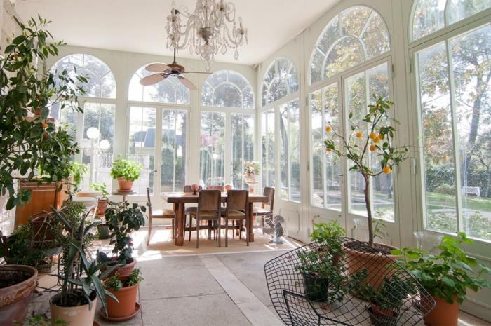 Plante Pour Veranda Plantes D Int Rieur Sans Lumi Re