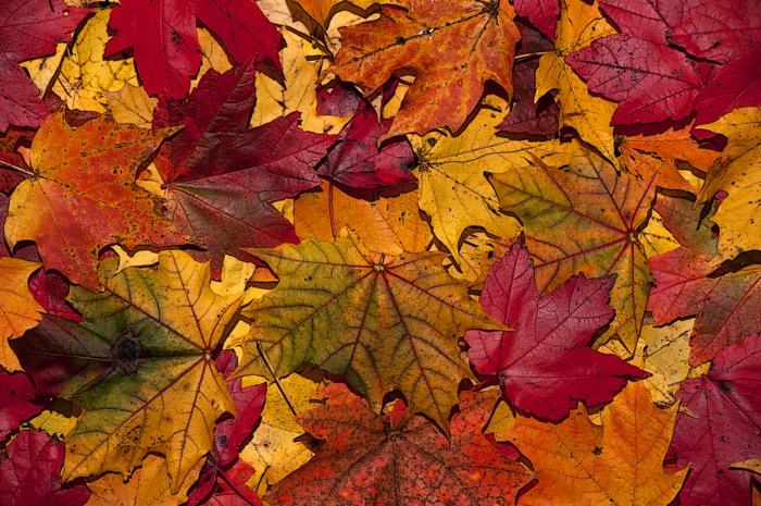 images d automne pour fond d