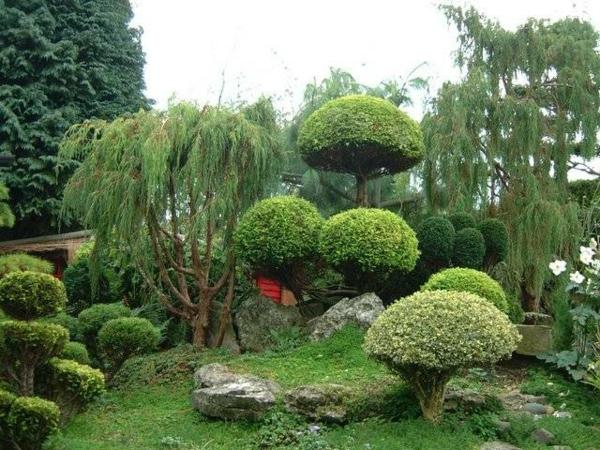 Traumgarten Erstaunliche Bilder