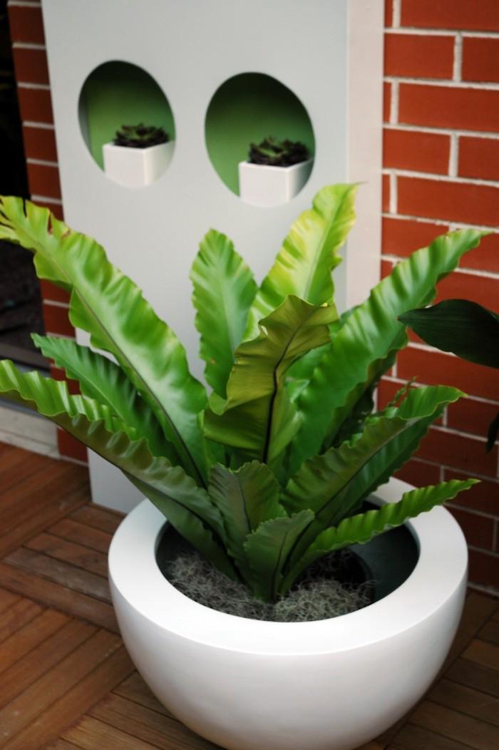 1001 Ideen F 252 R Zimmerpflanzen F 252 R Wenig Licht