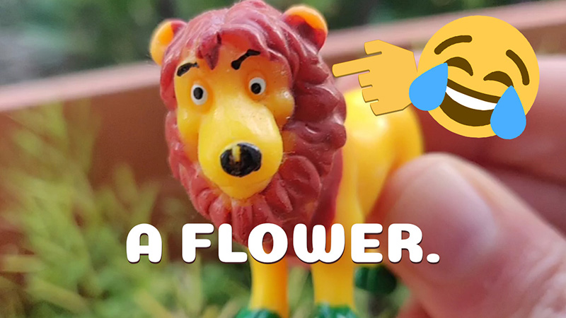 image recognition mistakes lion for a flower