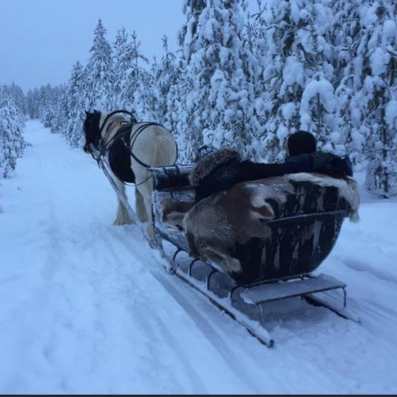 balade à cheval en Laponie