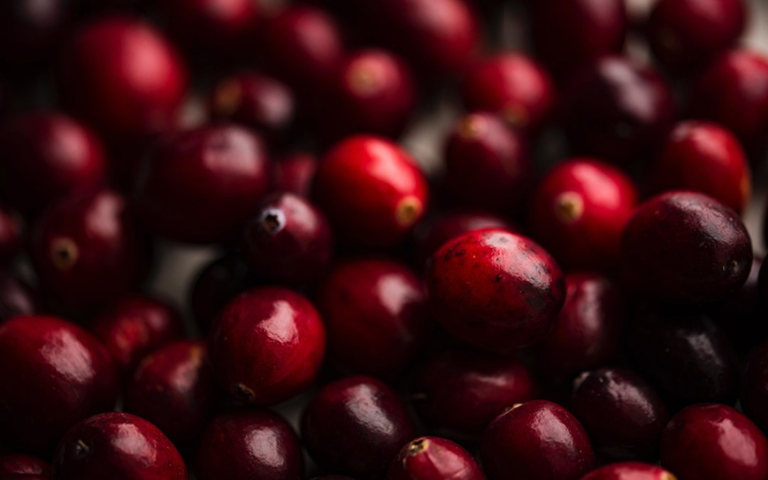 Lingonberry vs. Cranberry