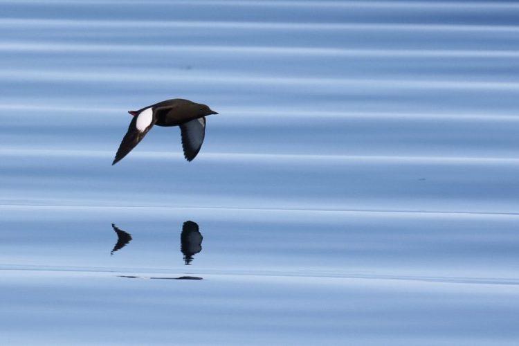 Arctic Kingdom Birds wildlife photography