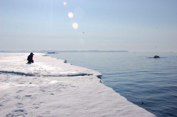 floe edge_Arctic Kingdom