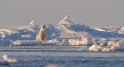 Maria_March_Polar Bear 6
