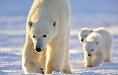Polar Bear Lodge_ by Michelle Valberg _MV83873