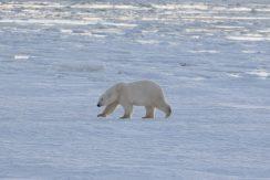private polar bear cabin