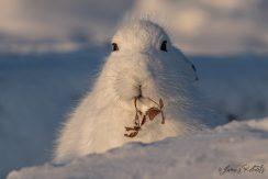 ArcticKingdom_James Roberts-16