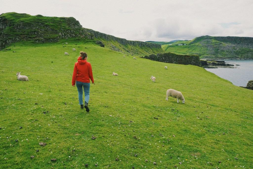 A woman walking in a field of sheep