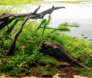 How To Setup A Basic Freshwater Aquarium