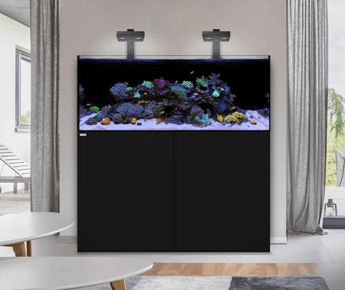 Setting up a Marine Aquarium