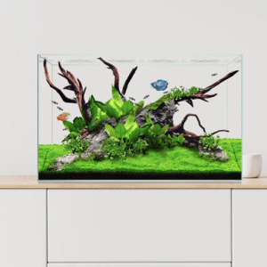 Cwaterbox clear mini aquarium