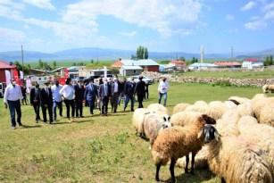 """""""Köyümde Yaşamak İçin Bir Sürü Nedenim Var"""" projesi kapsamında üreticilere koyun dağıtıldı"""