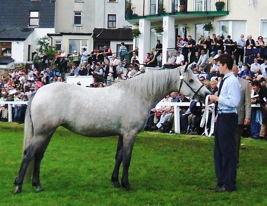 2 yr old filly winner Castle Jewel