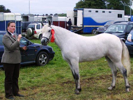 Butson Grey Sally Champion at Ballinrobe