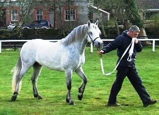 3yr.old Glencarrig Patrickby Glencarrig Prince-Festy Lady, Gearoid Curran
