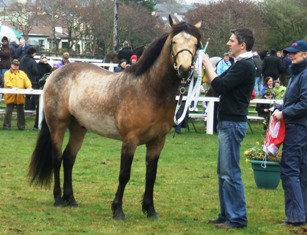 3yr old Rosscon Surprise by Templebready Fear Bui-Cooloo Lady, P.J.Watson