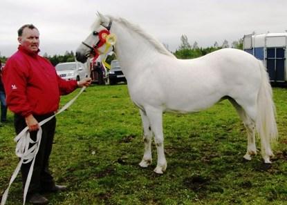 Champion Connemara Pony at Claremorris with Tom Bourke