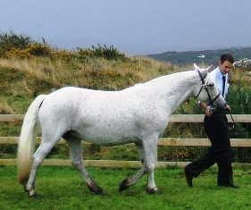 Independent with Cathal Mullen, Roundstone Show 08