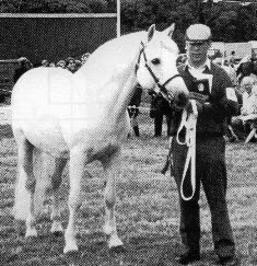 Murphy Rebel won the Connemara Championship at Galway County Show in 1991, with Philip McMahon