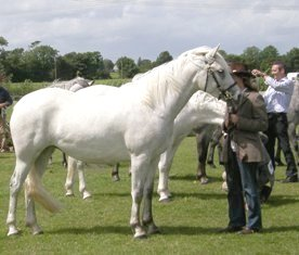 Ardenore Silver Lady, Winner 3yr old filles and Reserve Champ.