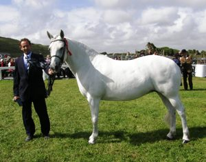 Coral Mistys Jane won 13yrs and over mares class with Tom Conneely