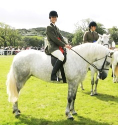 Newtown Blossom wins Class C for 4 and 5 yr. old ponies