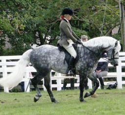 Fernville Danny wins Stallion Class H with Grace Murphy