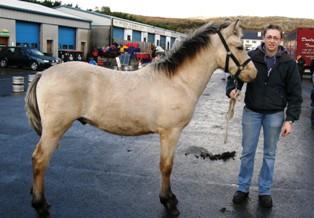 4 Caroline Lydon got  1350 for colt foal Sun