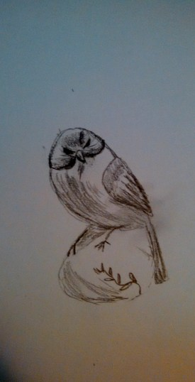 Bird six minute sketch