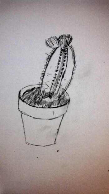 cactus drawing2